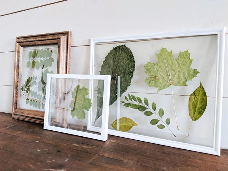 Делаем модный гербарий под стеклом в фоторамке (мастер-класс)